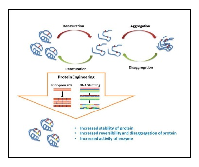 Protein Stability, Folding, Disaggregation and Etiology of Conformational Malfunctions